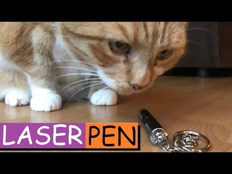 CAT REACTION TO LASER POINTER: Cats chasing laser pointer.