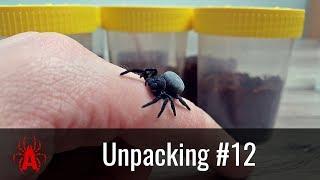 Unpacking #12 Co wygrałem w konkursie u Arachnolandii?