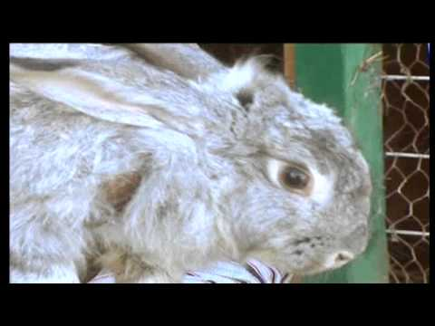 Business Weekly pt. 2 - Breeding rabbits [04.05.11]
