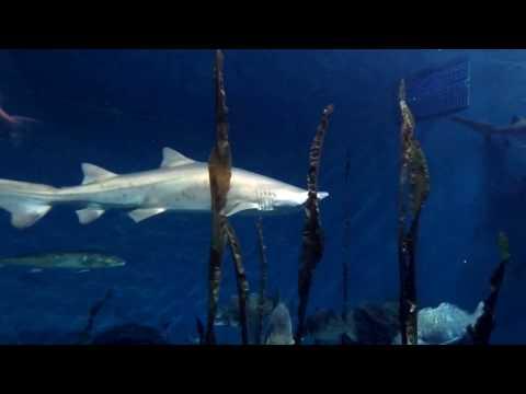 Shark Tank Aquarium Underwater