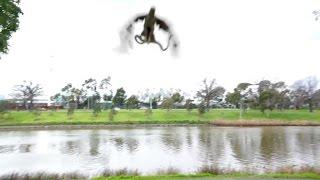 これも焼いてくれや。ヒト科のバーベキューに鷹先輩が参戦。ヘビを空中から投げてよこす(オーストラリア)