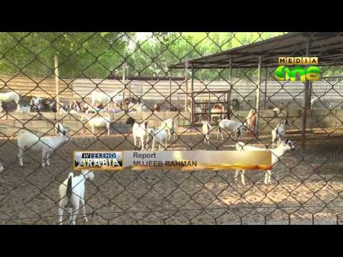 Abdul Latheef changes desert into dense greenery at Alkhor in Qatar - Weekend Arabia (Epi120 Part3)