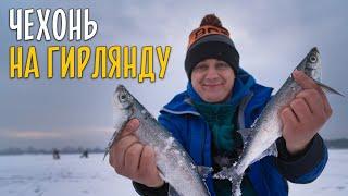 ЛОВЛЯ ЧЕХОНИ на гирлянду Зимняя рыбалка со сломанной пешней
