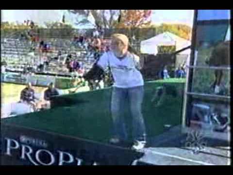 Capp breaking the Purina Incredible Dog Challenge Dock Jumping record