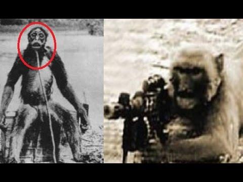 El Experimento de los Hombres Monos-Documental