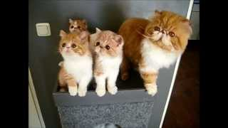 Exotic dancing for kittens
