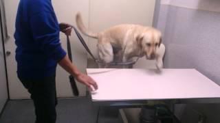 ルーカス君は、診察台に自ら乗ります。 前脚から、採血するときも協力し...