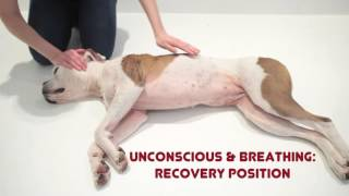 How to help an unconscious dog