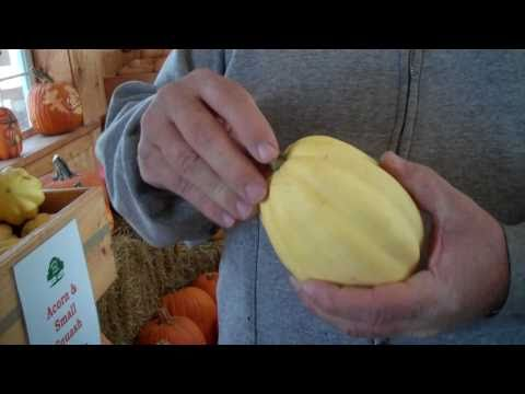 How to Identify Squash: Different Squash Types