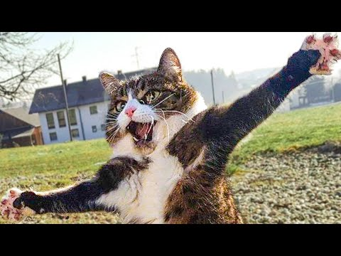 😁 Funniest 😻 Cats and 🐶 Dogs – Awesome Funny Pet Animals Life Video 😇