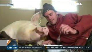 Канадець виховує і ростить свиню наче власну дитину