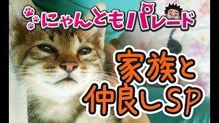【サンシャイン池崎猫】家族と仲良しスペシャル〜にゃんともパレード〜