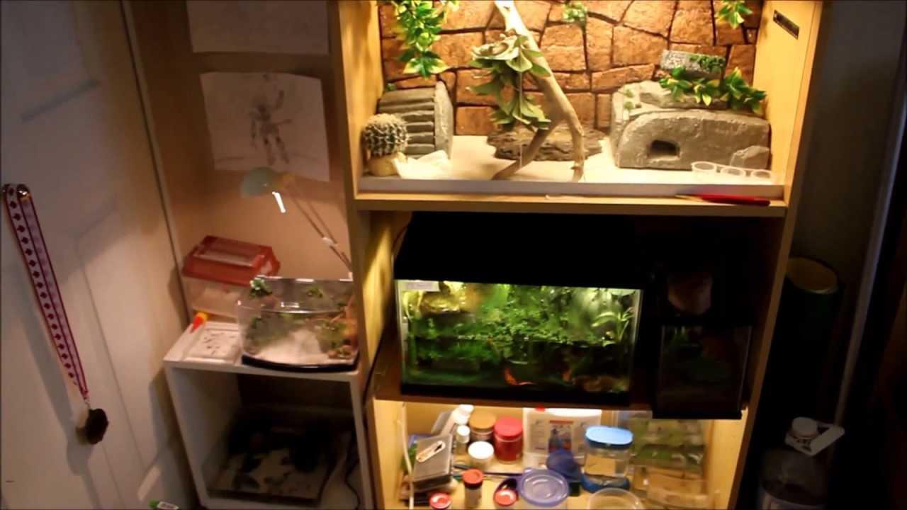 Reptile Room Design