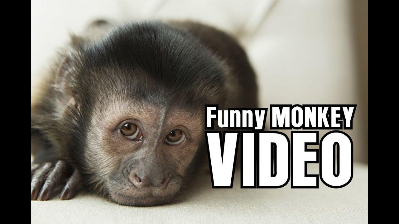 Uncategorized Funniest Videos For Kids funny monkey videos for kids youtube