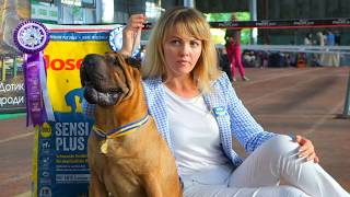Шарпей Чемпион. Выставка собак. Одесса 02.09.17. Sharpey the Champion. Dog show. Odessa 02.09.17.