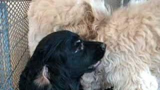 Repeat youtube video สุนัขเป็นสัด 19-01-2553