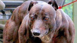 10 giống chó hiếu chiến nhất thế giới