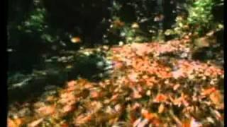 Фильм  Земляне  (полная версия, www.EarthlingsFilm.ru)ч.2