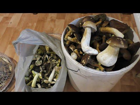 Vlog: Опять Хорошая Погода /Кто набрал грибов?/Подарки от бабушки