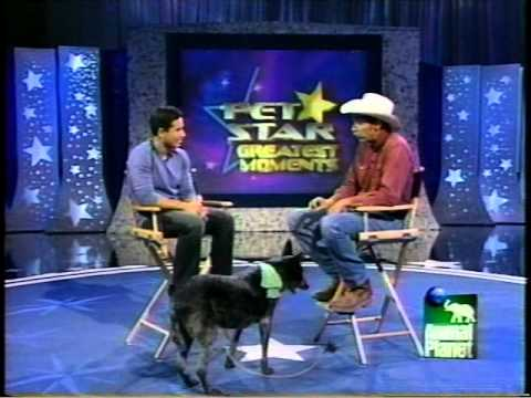 Skidboot on Pet Star