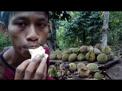 Belah & makan #durian sampe (gumoh)dari 4 jenis ini mana yang anda suka-