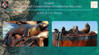 Project: Survey and conservation of California sea lions (La Paz, B.C.S., México)