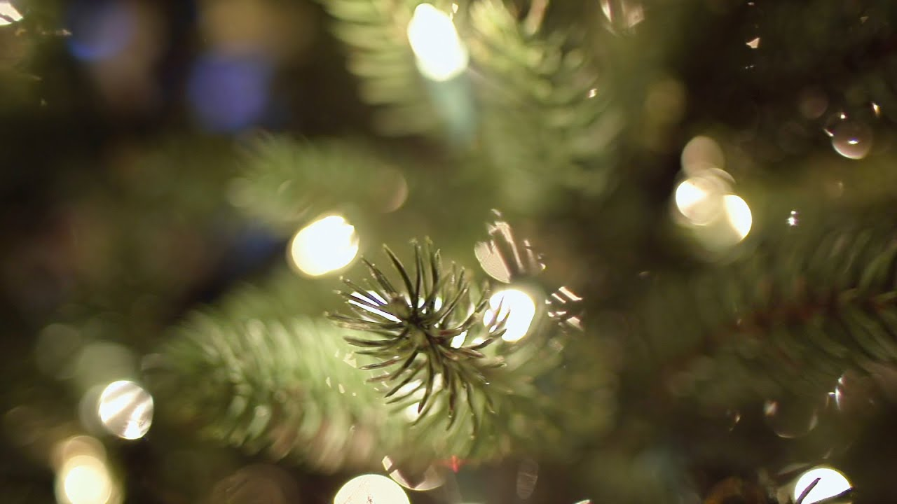 beachfront b roll christmas tree bokeh free to use hd stock