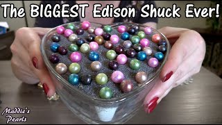 57 EDISON OYSTERS! Biggest Edison Oyster Shuck EVER! HUGE 12mm Edison Pearls in Live Pearl Party