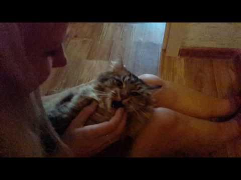 Замедленная кошка slow motion hissing cat