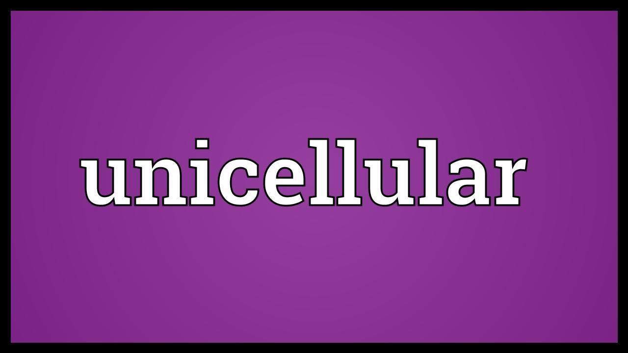 Unicellular Meaning Youtube Related Pictures Basic Animal Cell Diagram With Labels Animaldefine