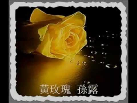 黃玫瑰  孫露