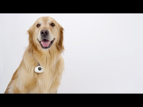 PAWSCAM | Smart, Wearable Camera for dogs