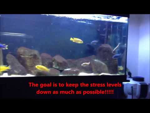How To Deal With Ammonia In Aquariums