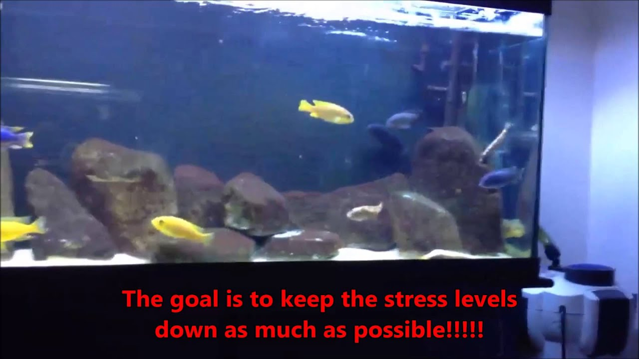 Freshwater fish tank ammonia levels - How To Deal With Ammonia In Aquariums