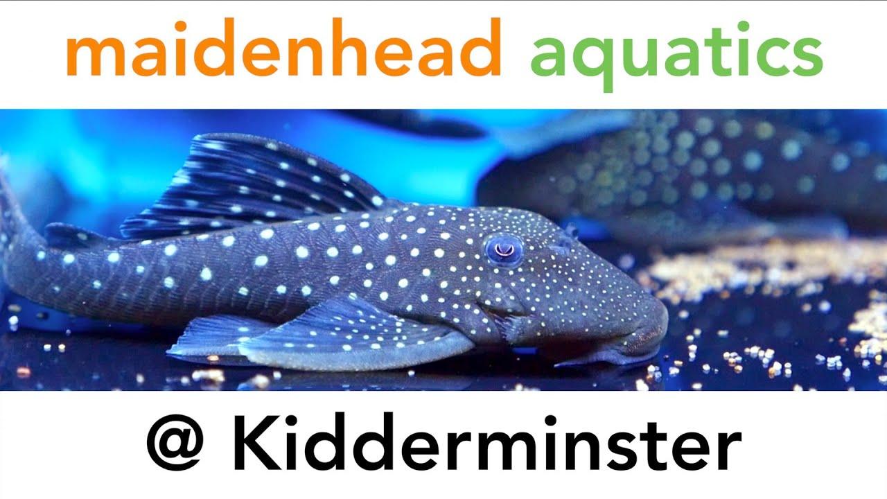Fish aquarium kidderminster - Maidenhead Aquatics Kidderminster