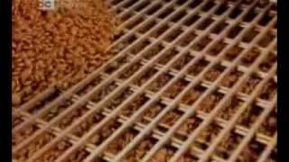 Kedi ve Kopek Mamasi -.swf Resimi