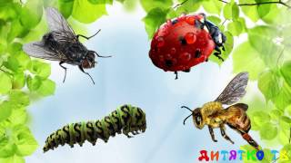 Угадай насекомых. Задание для детей. Насекомые для детей. Животные для детей видео.