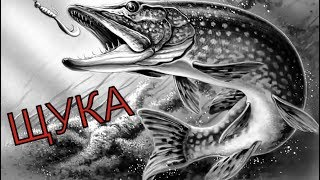 Цікаві моменти щука 2017-2018 .Спінінг,жерлицы. fishing ловля щуки рибалка.