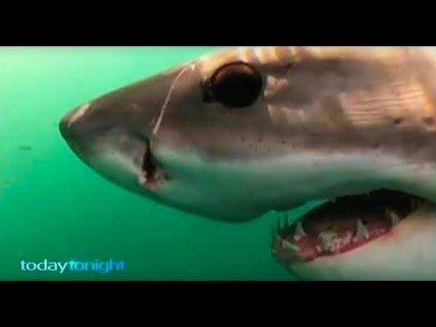 Shark Attack Survivor  - Part 1, 2, 3