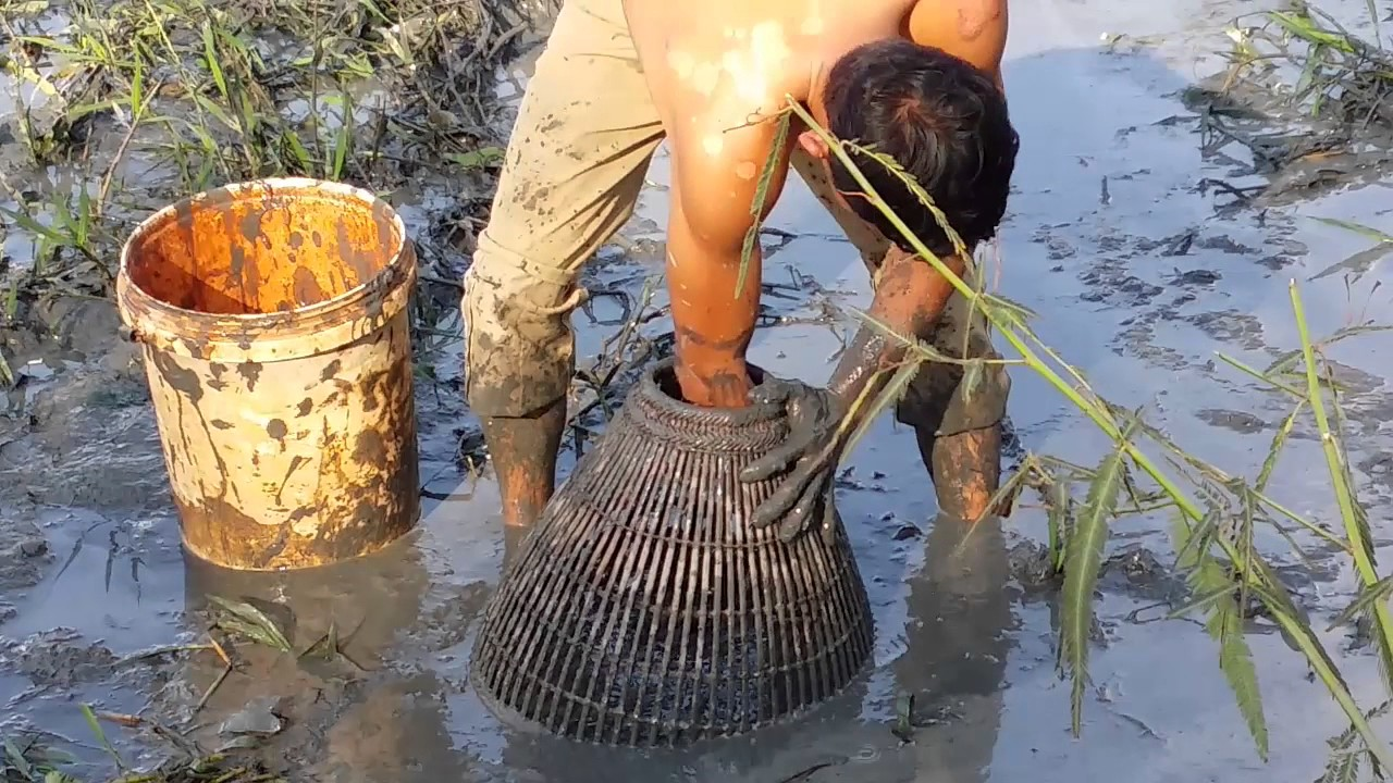 Download Cambodia fishing (people fish catch in mud)