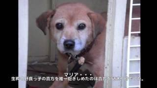 犬の歌 http://dog.chumpeace.net/song 『みんなでつくる☆ビデオクリッ...