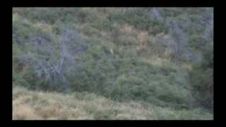Fallow Buck Hunting in New Zealand