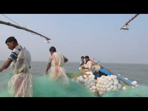 Fishing In Bay Of Bengal