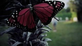 Edu Imbernon & Los Suruba - Punset [Eklektisch] Official Video