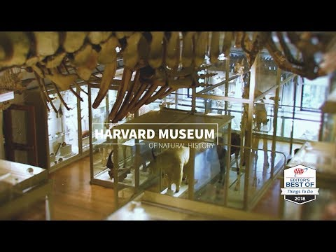 Boston: Harvard Museum Of Natural History (Take The Kids!)