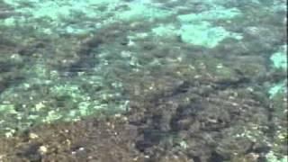 Скачать Huckleberry Finn Blue Clear Water
