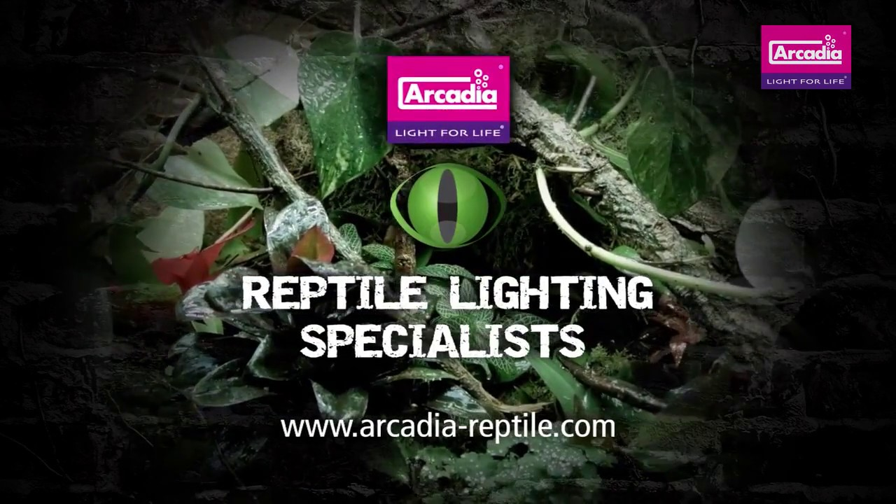 Arcadia Verlichting Arcadia 13w Led Jungle Dawn E27 Ha