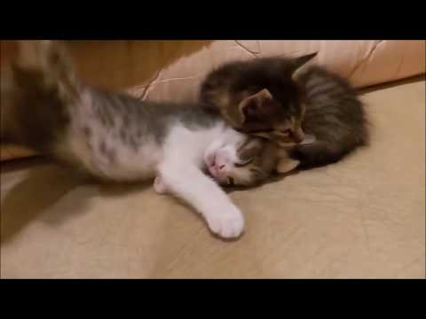 TOP Funny Cats and Dogs Dancing and Singing