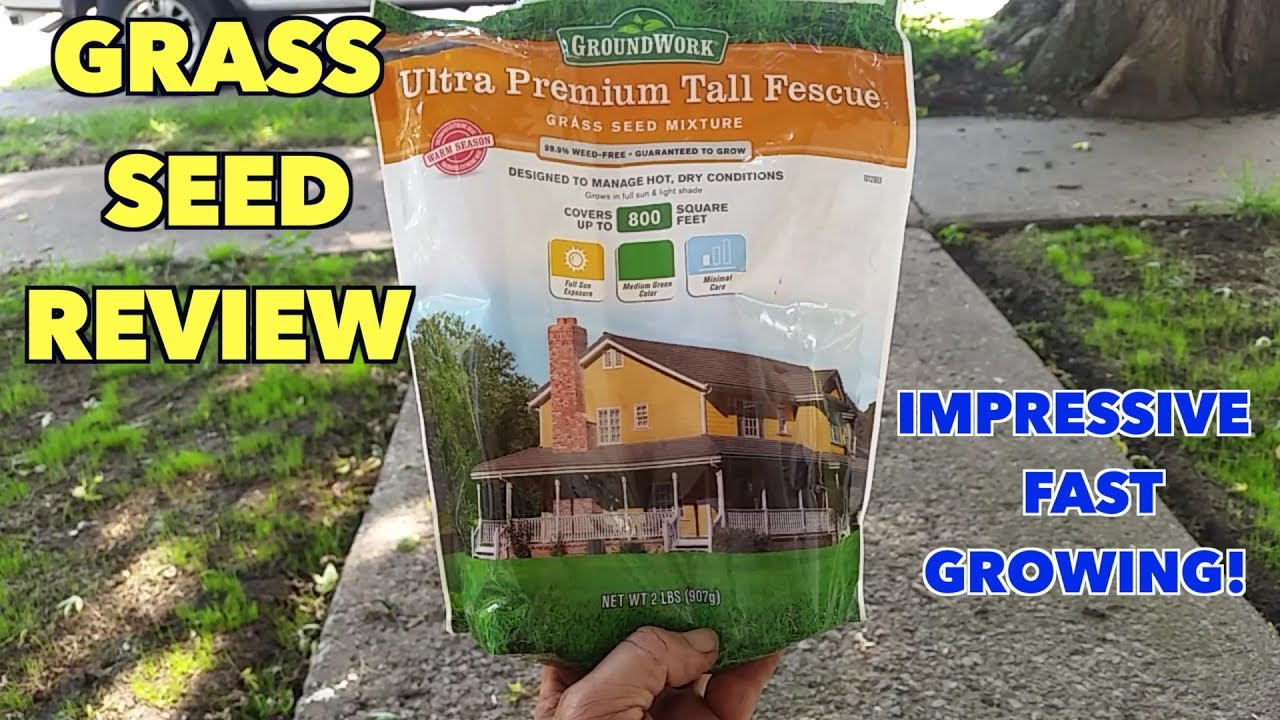 Groundwork Grass seed review. Impressive! - YouTube