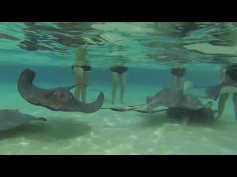 Stingray City - Grand Cayman, Cayman Islands